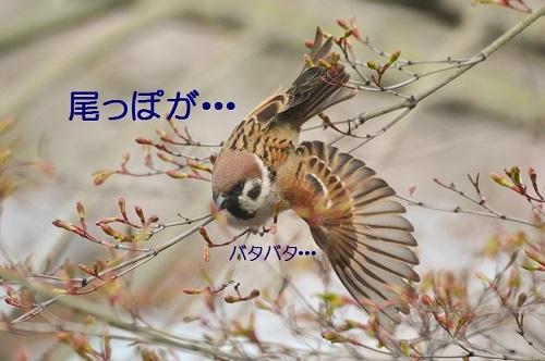 100_20180418202251b97.jpg