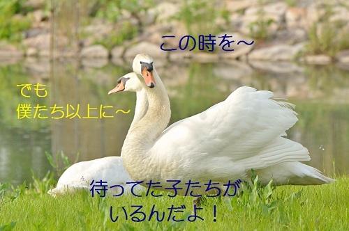 130_20180507211334a28.jpg