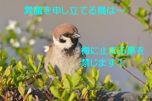 140_201804011931175c5.jpg