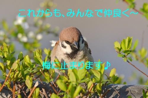 160_20180401193249298.jpg