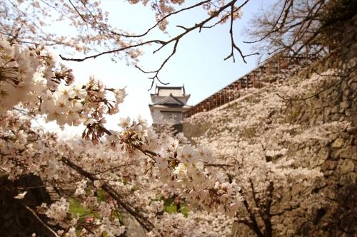 スウェーデンホーム 津山の桜