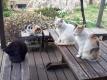 今朝の猫たち