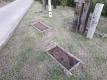 芝生の花壇