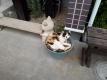 鉢の中のハナ