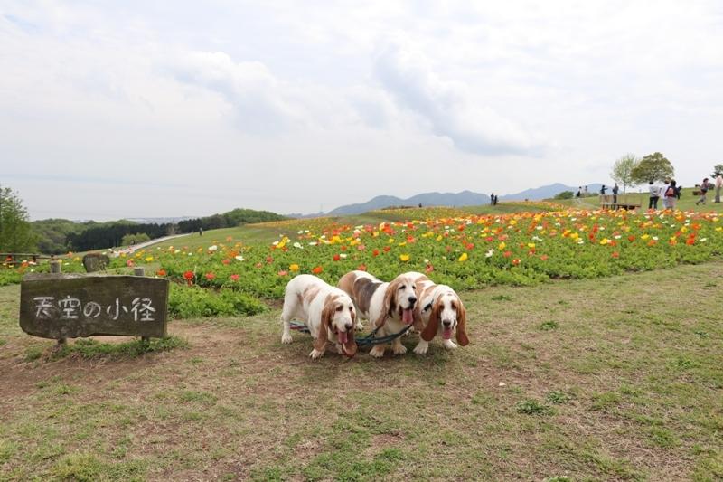 花さじき0012
