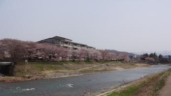 4㎞続きます桜祭りの舞台です。
