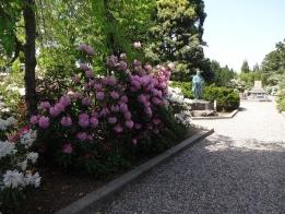 土山御坊跡は石楠花満開