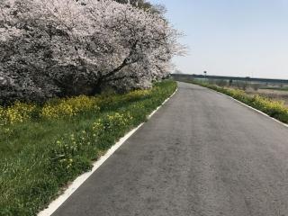 荒川サイクリングロード 行田 吹上 2018