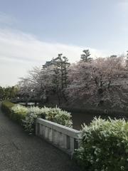忍城のさくら 2018
