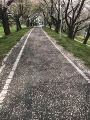 荒川サイクリングロード 2018