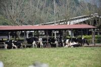 牛のエサ場180406