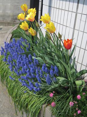 2018春の花壇
