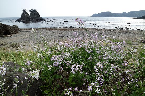 18-04-02_taraimisaki-shizuoka_00102.jpg