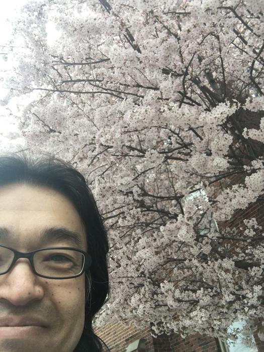 2018桜1