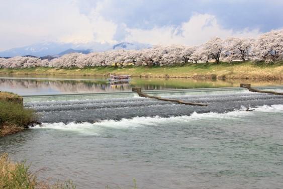 蔵王連峰と花見屋形船