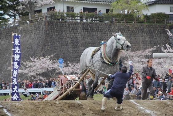 土手を駆け上がる5歳馬クラス