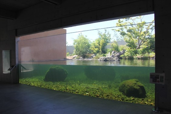 自然環境を再現した水槽