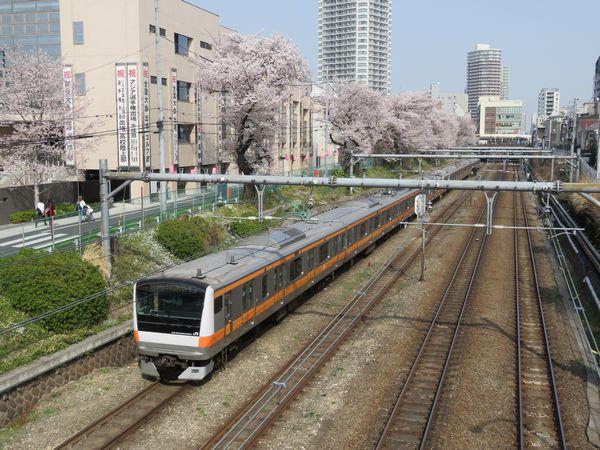 東中野の桜並木の脇を走る中央線E233系電車