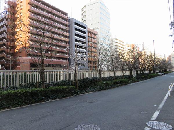 植え替えが進む目黒川沿いの桜。手前の4本が新しい木。(写真は品川区内のもの)