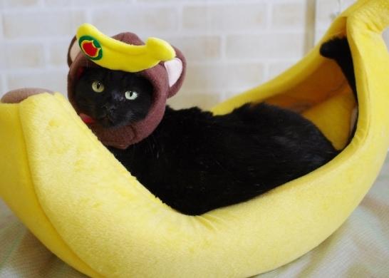バナナ勝ち取っちゃったウキッ