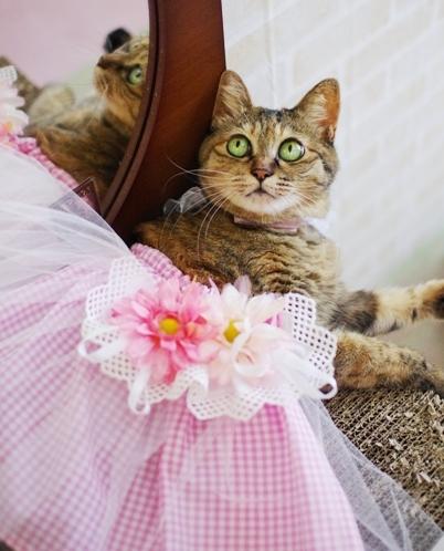 プリンセスキララよ。¥^-だ^¥sだd