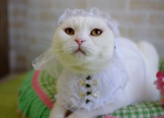 純白の花嫁???¥あsdさだs