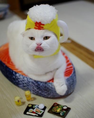 僕鮭食べdssds