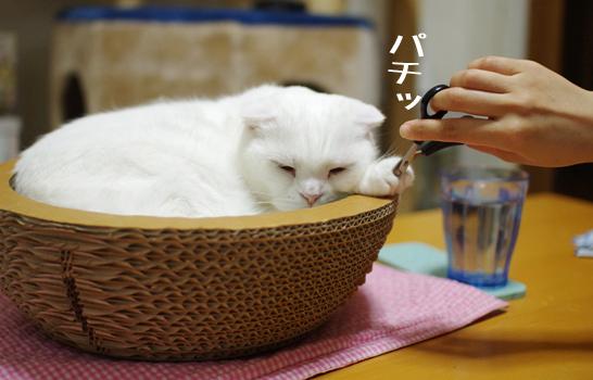 daijyiosudaのコピー
