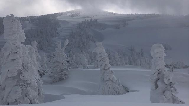 15樹氷原から山を見上げる