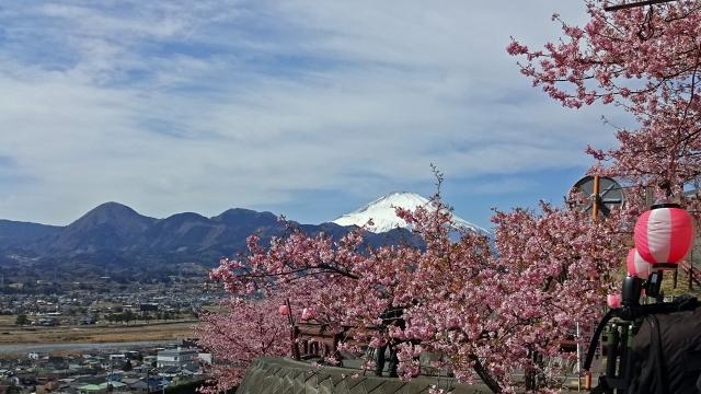 6河津桜と富士山と箱根の山並