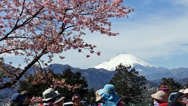 7松田山西平畑公園からの富士山