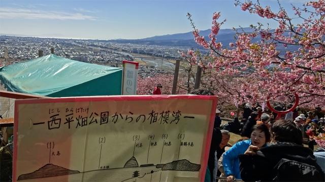 8松田山西平畑公園からの相模湾