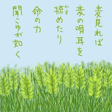 麦の唄1 - コピー