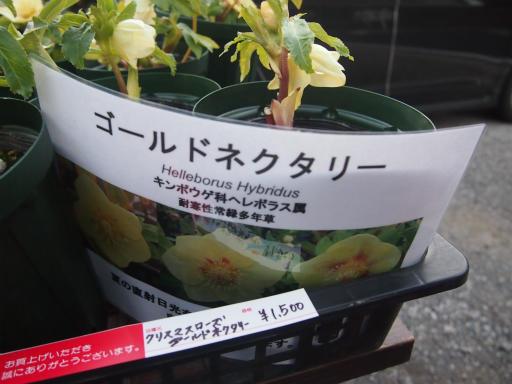 20150111・植物6-2・ゴールドネクタリー
