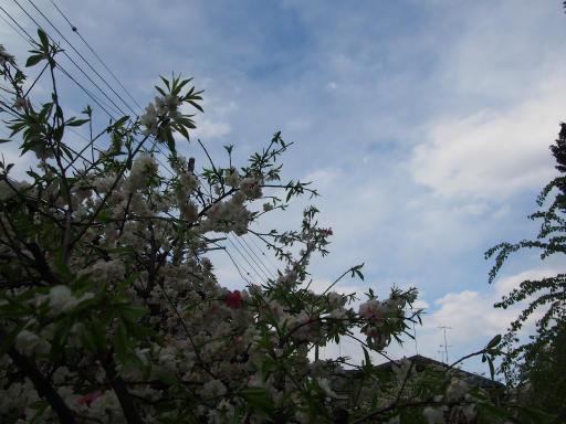 20180408・夏近し近所の空04・モモと空1