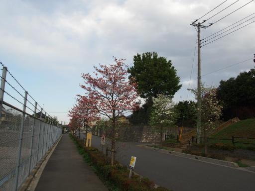 20180408・夏近し近所の散歩2-18