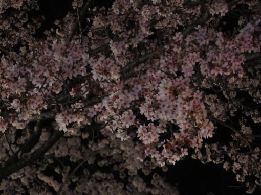 桜山0001_2