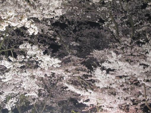 桜山0001_3