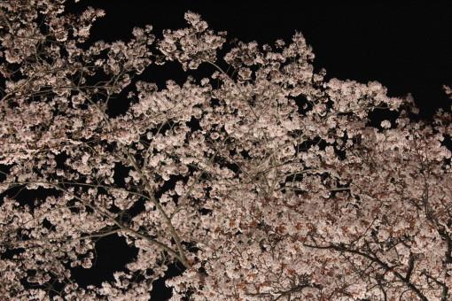 桜山0001