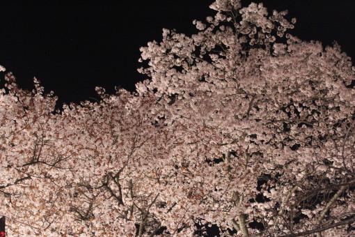 桜山0001_1