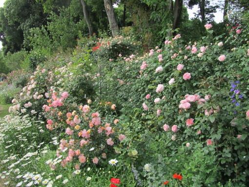 坂野ガーデン0001_3