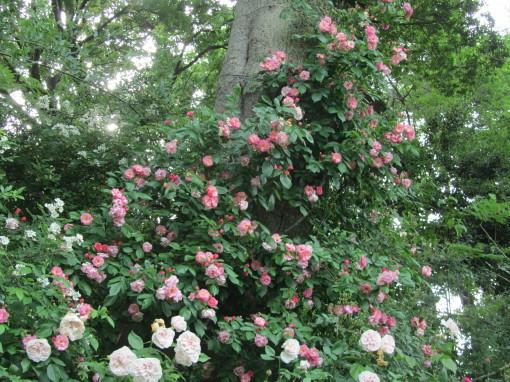 坂野ガーデン0001_2