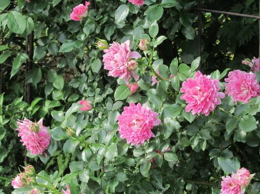 坂野ガーデン0001_6