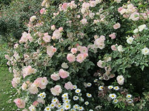 坂野ガーデン0001_4