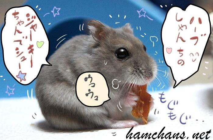 ハムスター3