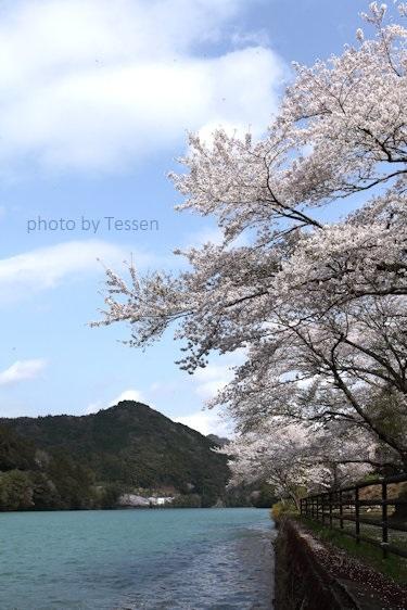IMG_0847桜