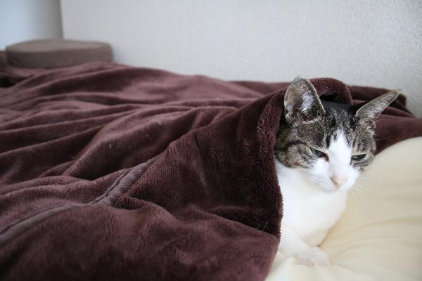 毛布からでられない