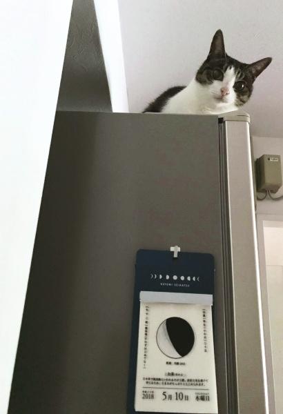 猫はホットスポットを忘れない