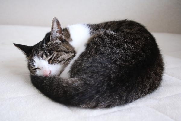 猫と人の体感温度差