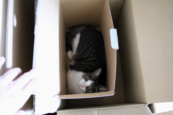 箱の中の箱の中の箱に
